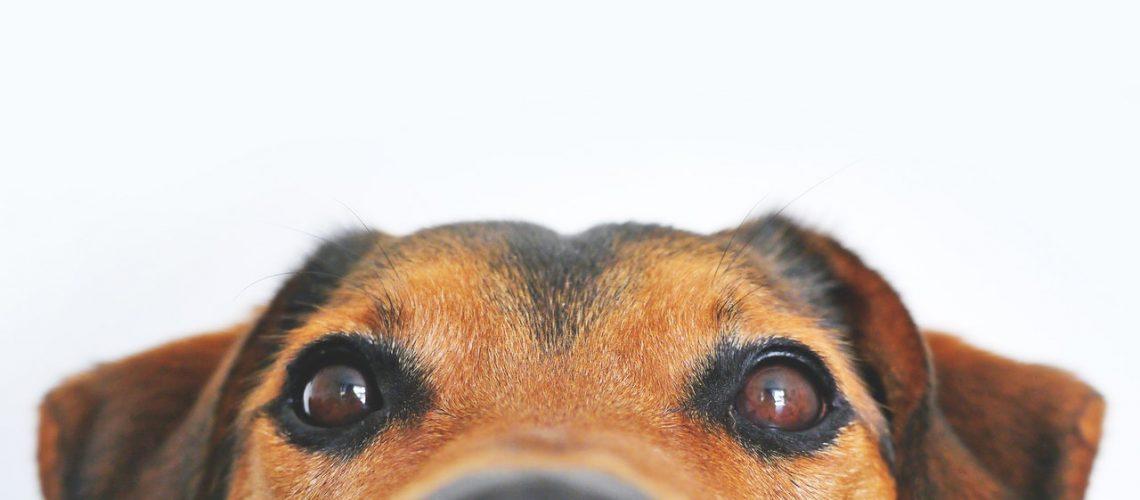 adorable-animal-blur-406014