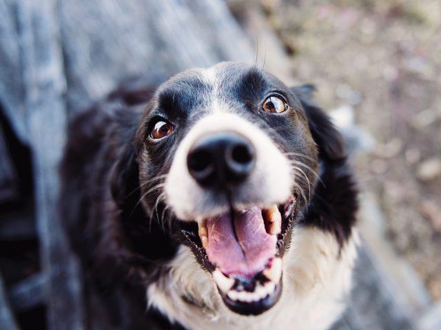 animal-blur-canine-551628